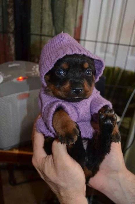 かわい過ぎる子犬の画像の数々!の画像(16枚目)