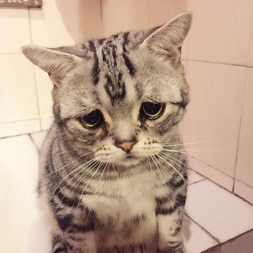 悲しくなってしまう猫の画像(5枚目)