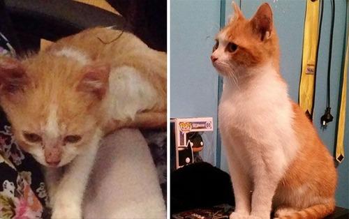 【画像】子汚い野良猫を拾って育てたら、こんなに可愛いニャンコになりましたよ!の画像(4枚目)