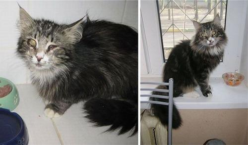 【画像】子汚い野良猫を拾って育てたら、こんなに可愛いニャンコになりましたよ!の画像(26枚目)