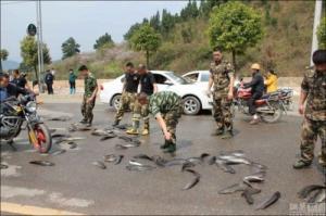 事故で魚がいっぱい落ちたの画像3