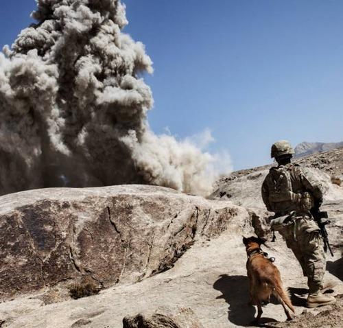 戦地での軍用犬の日常がわかるちょっと癒される画像の数々!!の画像(27枚目)