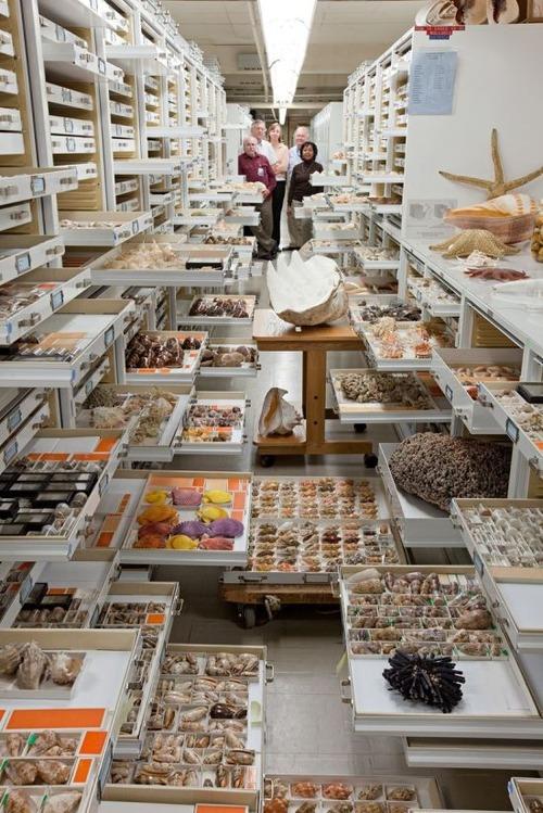 【画像】アメリカを代表するスミソニアン博物館の標本の保存倉庫が凄い!!の画像(5枚目)