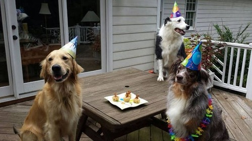 動物達の誕生日の写真の数々!!の画像(22枚目)
