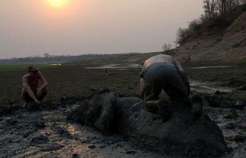 【画像】底なし沼に入った像の救出風景が感動的!!の画像(7枚目)