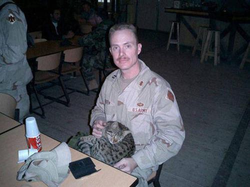 戦場にもネコは居る!!極限状態でも癒される戦場のネコの画像の数々!!の画像(20枚目)