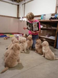 かわい過ぎる子犬の画像の数々!の画像(69枚目)