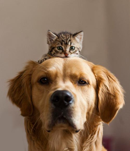 ほのぼのする!仲の良い犬と猫の画像の数々!!の画像(21枚目)