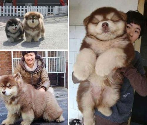 可愛い?可愛くない?ちょっと特徴的な雑種の犬の画像の数々!!の画像(6枚目)
