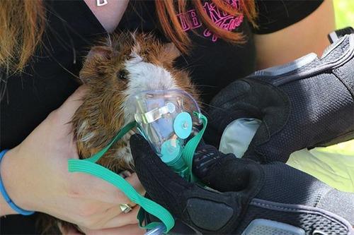 【画像】動物達も本気で助ける!ちょっと癒されるレスキュー隊の仕事の様子!!の画像(11枚目)