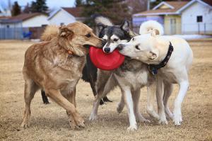 ずっと友達!仲がいい犬たちの画像が癒される!!の画像(31枚目)