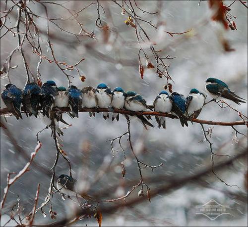 超過密!密集状態の鳥の画像がもふもふで癒されるwwの画像(3枚目)