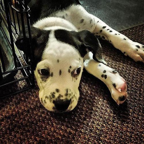 可愛い?可愛くない?ちょっと特徴的な雑種の犬の画像の数々!!の画像(21枚目)
