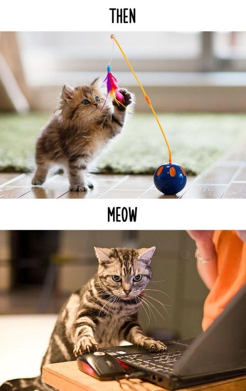 テクノロジーの進化がネコ達に与えた影響の比較画像の数々!!の画像(13枚目)
