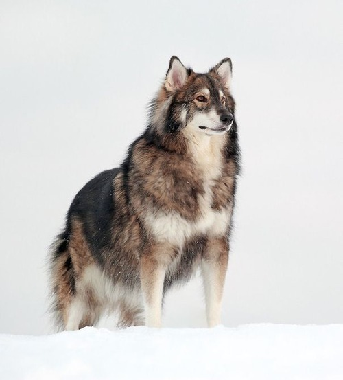 可愛い?可愛くない?ちょっと特徴的な雑種の犬の画像の数々!!の画像(38枚目)