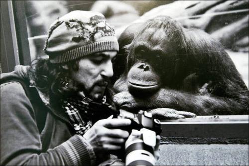 【画像】自然を撮影するカメラマンに興味津々の動物達!!の画像(18枚目)