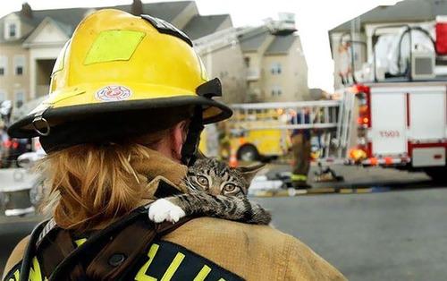 【画像】動物達も本気で助ける!ちょっと癒されるレスキュー隊の仕事の様子!!の画像(13枚目)