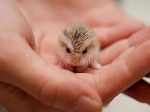 かわい過ぎる!癒される!動物の子供の画像の数々!!の画像(17枚目)
