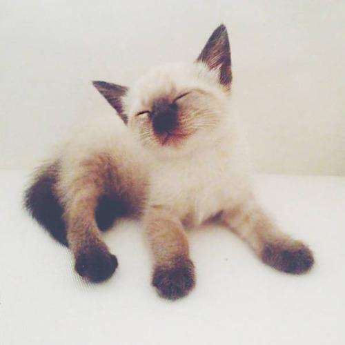 kittens_34