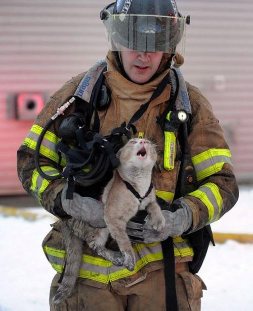 【画像】動物達も本気で助ける!ちょっと癒されるレスキュー隊の仕事の様子!!の画像(6枚目)