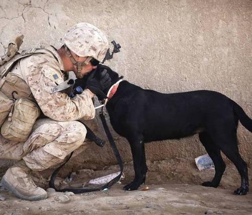 戦地での軍用犬の日常がわかるちょっと癒される画像の数々!!の画像(9枚目)