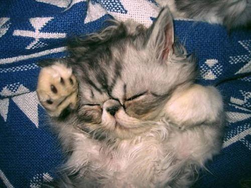 kittens_26