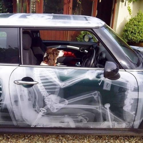 面白い自動車の改造や使い方の画像(30枚目)