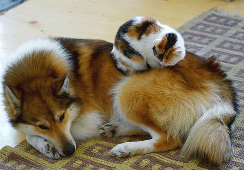 ほのぼのする!仲の良い犬と猫の画像の数々!!の画像(23枚目)