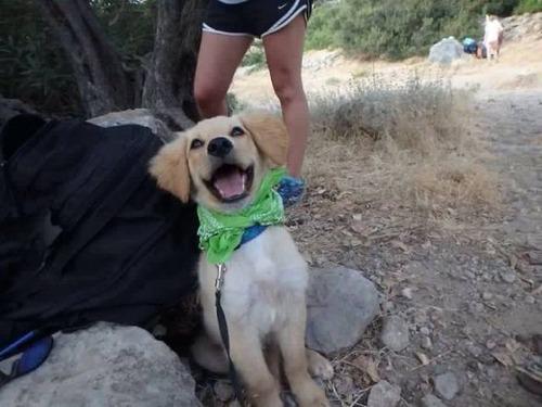 犬も笑うの画像(35枚目)