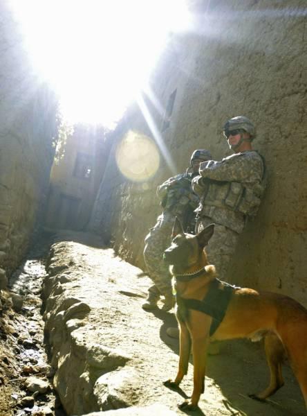 戦地での軍用犬の日常がわかるちょっと癒される画像の数々!!の画像(64枚目)