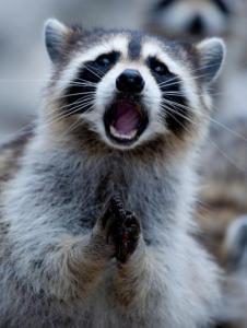 動物達が驚いている瞬間の表情をとらえた写真が凄い!の画像(38枚目)