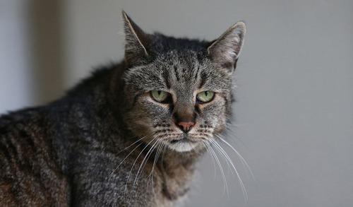 31歳の誕生日を迎えたネコの画像(5枚目)