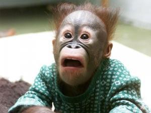 動物達が驚いている瞬間の表情をとらえた写真が凄い!の画像(13枚目)