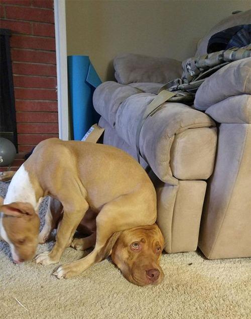 犬は可愛いけど、かなりジャマな感じの犬の画像の数々!!の画像(12枚目)