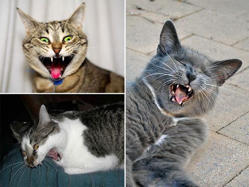 凶悪そうな猫の画像(12枚目)