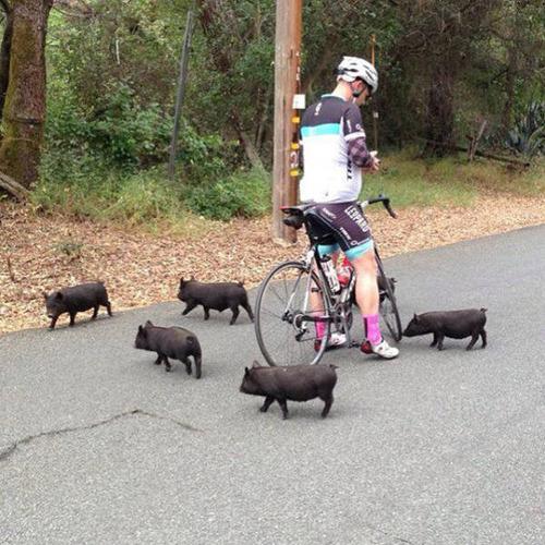 自転車にまつわるちょっと面白ネタ画像の数々!!の画像(7枚目)