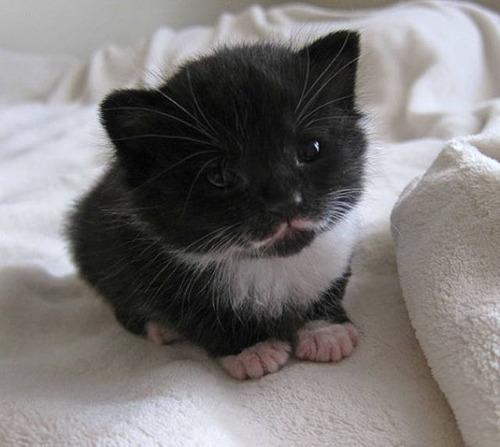 kittens_17