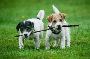 ずっと友達!仲がいい犬たちの画像が癒される!!の画像(16枚目)