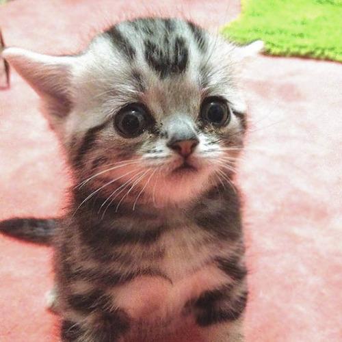 kittens_07