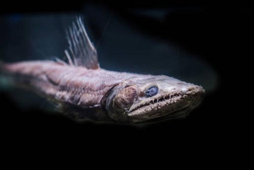 深海の生物の画像(20枚目)