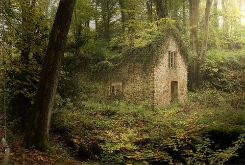 森の中の隠れ家の画像(19枚目)