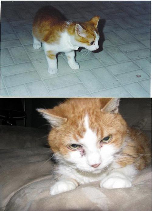 犬や猫の最初に撮った写真と最後に撮った写真の数々の画像(8枚目)