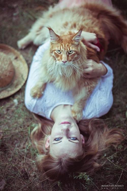 クソデカイ猫「メインクーン」の大きさがよく分る画像の数々!!の画像(10枚目)