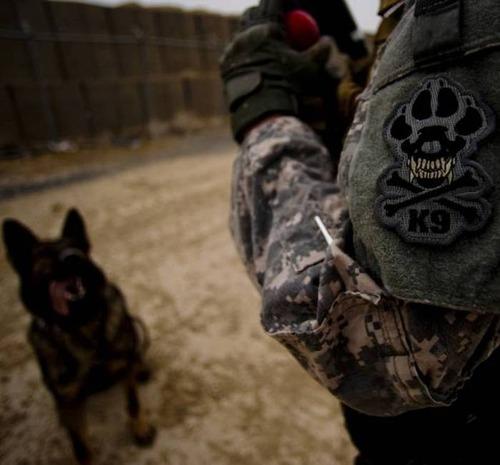 戦地での軍用犬の日常がわかるちょっと癒される画像の数々!!の画像(12枚目)