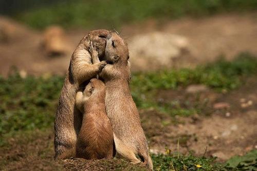 色々な動物の親子の癒される画像の数々!!の画像(24枚目)