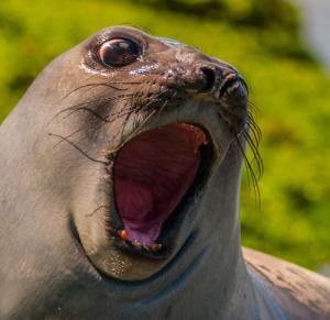 動物達が驚いている瞬間の表情をとらえた写真が凄い!の画像(34枚目)