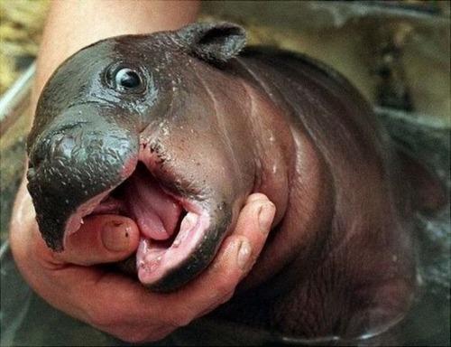 ほのぼのするけどちょっと怖い!幸せそうな動物たちの写真の数々!の画像(17枚目)