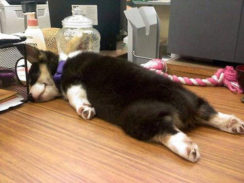どこでも寝れる!?どこでも寝てる可愛い犬の画像の数々!!の画像(26枚目)