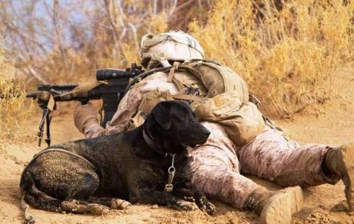 戦地での軍用犬の日常がわかるちょっと癒される画像の数々!!の画像(33枚目)
