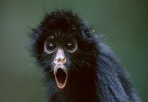 動物達が驚いている瞬間の表情をとらえた写真が凄い!の画像(39枚目)